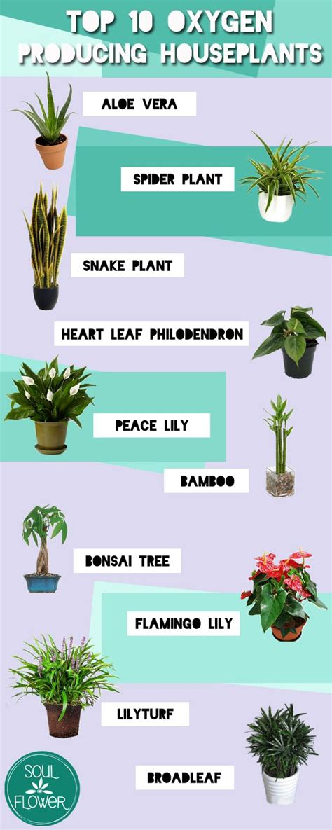 best indoor plants for oxygen 25 best ideas about houseplant on pinterest plants