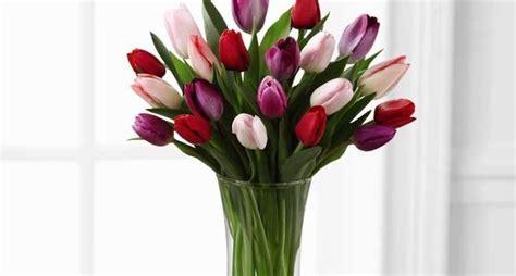 tulipani in vaso tulipano bianco significato significato fiori regalare