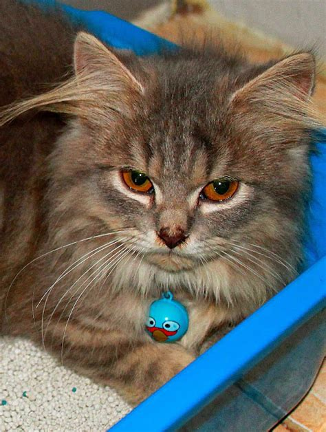 Sisir Logam Untuk Kucing my kitten