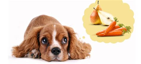 alimentazione corretta per cani l importanza della corretta limentazione per il