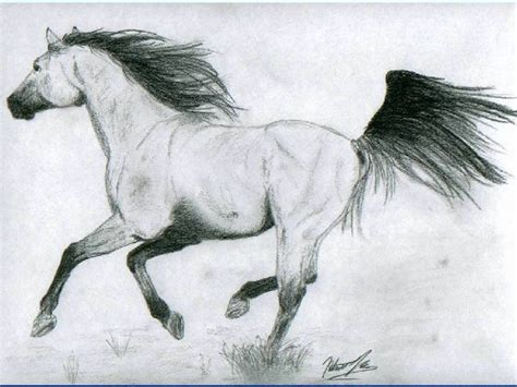 Drawings Of Animals by 110 Best Animal Drawings Images On Drawing