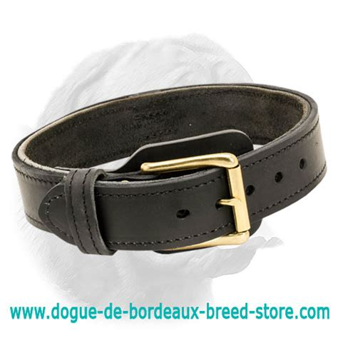 how to your not to chew things up leash with buckle handle how to stop your puppy digging