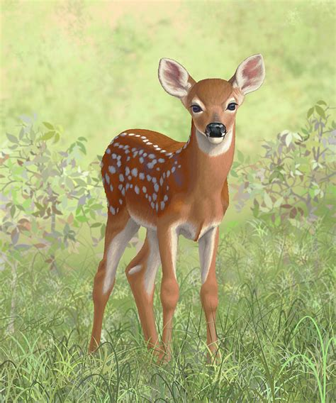 fawn images whitetail deer fawn painting by crista forest
