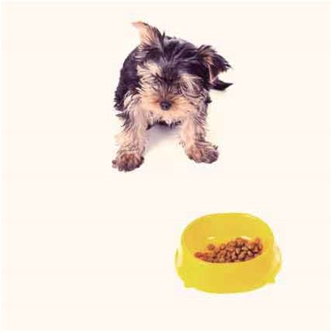 yorkie food what is the best puppy food for a chihuahua