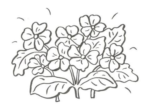 imagenes flores hermosas para colorear imagenes para colorear de flores archivos dibujos