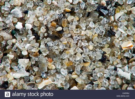 up of sea sand grains containing shell fragments silica and stock photo royalty free