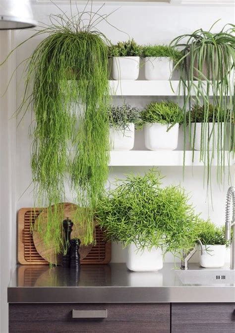 indoor wall herb garden 20 ways to start an indoor herb 25 awesome indoor garden planting projects to start in the