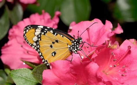 all best picos poze desktop flori buchete de flori imagini fluturi si flori pentru desktop poze imagini desktop