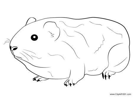 guinea pig coloring pages guinea pig coloring pages free printable coloring pages