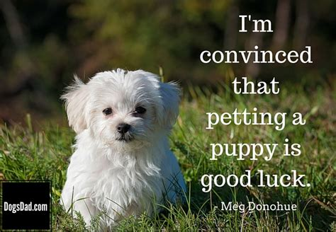 puppy sayings puppy quotes quotes and sayings about puppies and