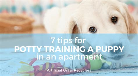 how to potty a puppy in an apartment 7 tips for potty a puppy in an apartment