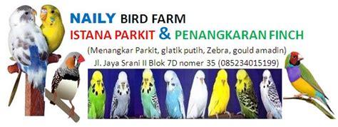 Tempat Pakan Burung Labet naily bird farm griya kenari blacktroath perkutut