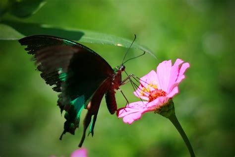 Cd Link Kupu Kupu dunia kupu kupu 1 by arielitem on deviantart