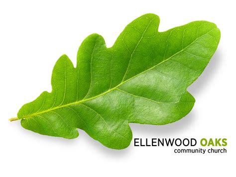 leaf clip free oak leaves clip free clip clipart bay