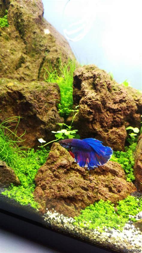 Holy By Lava holy lava flowgrow aquascape aquarien datenbank