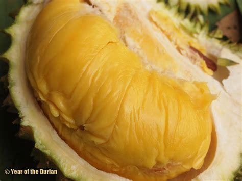 Bibit Durian the top 10 durian blogs