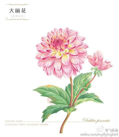 new year flower drawing 28 best images about pencil drawings on flower