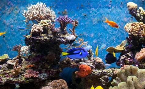 ghiaia per acquario acqua dolce piante per l acquario d acqua dolce eccone 7 dovete