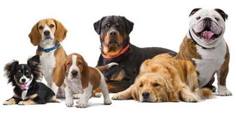 cheap breeds breeds and their price range in nigeria