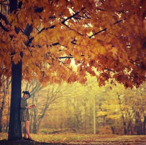 falling on tamarind trees a travelogue of books autumn beautiful books books leaves image