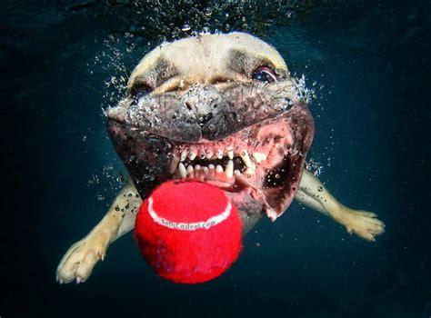 amazing underwater dog photography  seth casteel