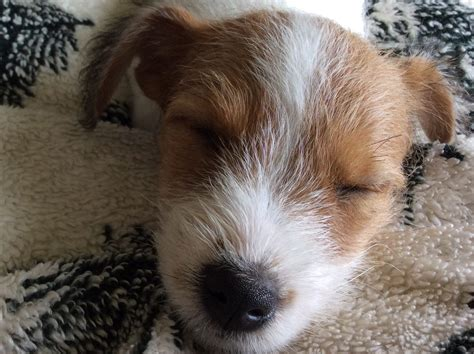 puppy find reviews top 178 reviews and complaints about puppyfind