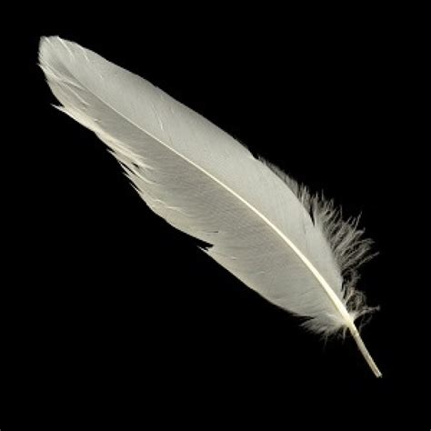 www feather white feathers for crafting