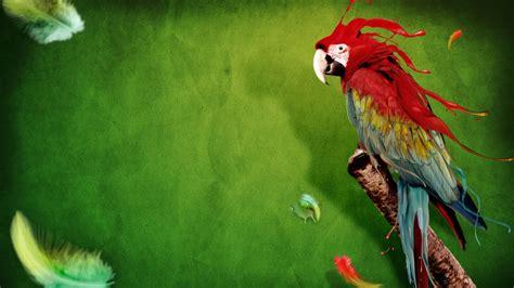 wallpaper full hd parrot parrot wallpapers best wallpapers