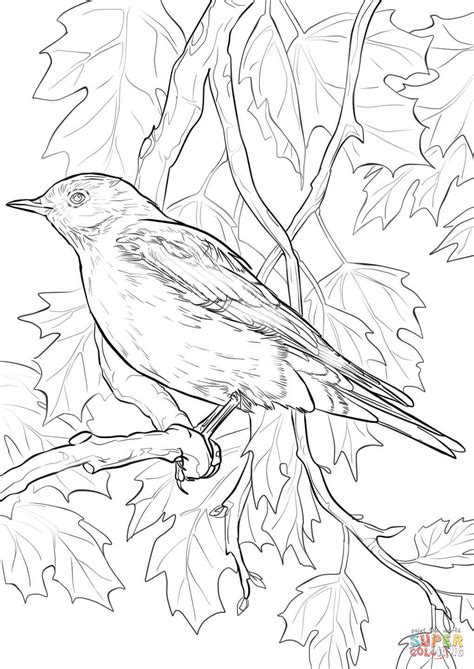 free coloring pages on bluebirds mountain bluebird coloring page free printable coloring