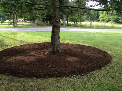 certified arborists columbia rensselaer counties new leaf tree services incplant health care