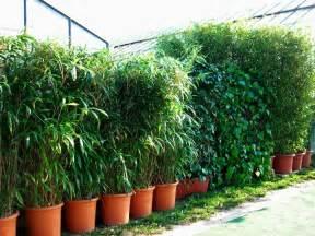 Garten Sichtschutz Holz Pflanzen 01360820170113 Bambus Sichtschutz Aufstellen Filout Com