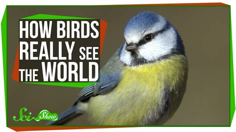 how birds really see the world youtube