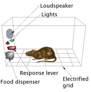 b and f system operant conditioning chamber