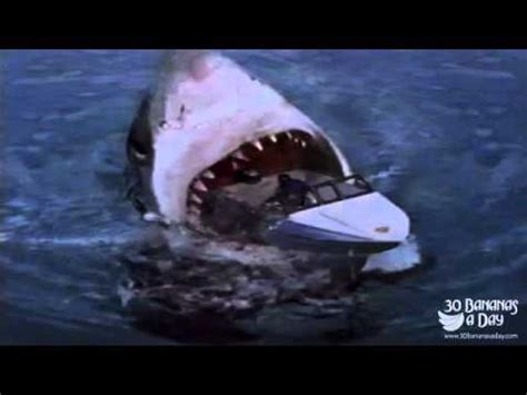 biggest tourist boat in the world megalodon shark attack tourist boat off sydney harbour