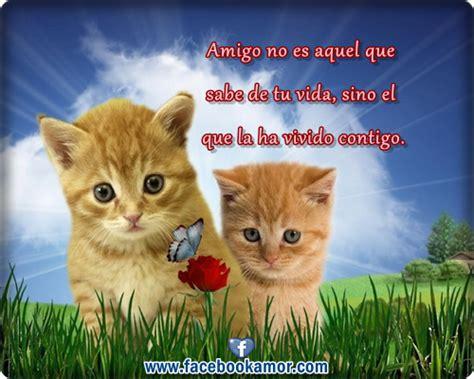 imagenes lindas de amor de gatitos imagenes de amor con gatos animados imagui