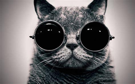 Cool Sunglasses Meme - blog meme thirty questions one word answers prinsesa s