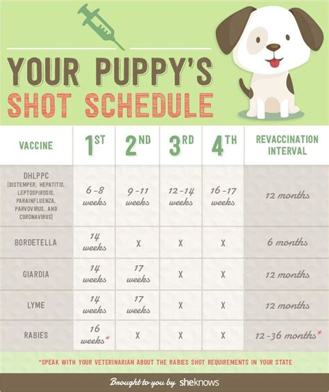 goldendoodle puppy vaccination schedule a complete list of all the vaccinations your puppy needs