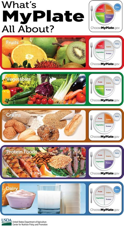 whole grains myplate options from my plate dairy protein fruit vegetable