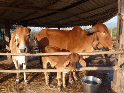 cow and cat power saha astitva foundation