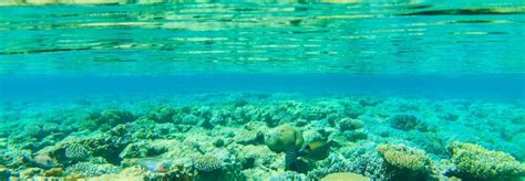 Investigating Seafloors And Oceans 1 scientists find the earth s constant hum is coming from the floor inhabitat green