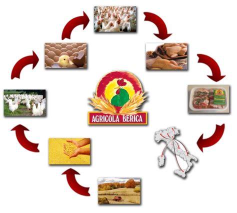 la filiera alimentare la filiera agricola berica soc coop