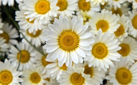 wallpaper with flowers pictures of flowers flower wallpapers
