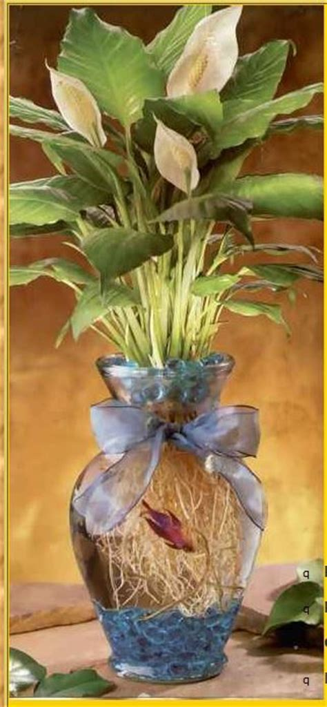 Betta Fish Planter by Pin By Leslie White On Fish
