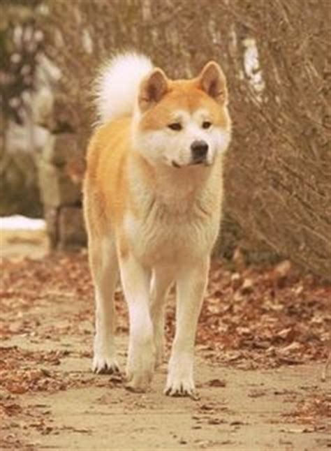 1000+ images about HACHIKO _ A big start !!!! on Pinterest ... Hachiko Movie2k