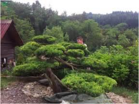 l ancestral japonais du niwaki loisir jardin
