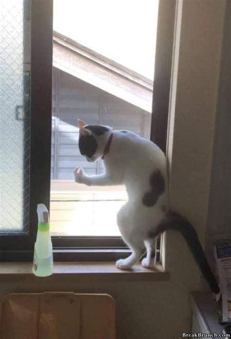 cat day  pics breakbrunch
