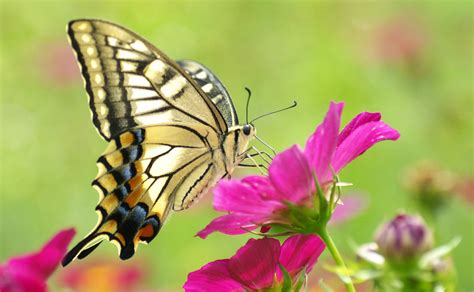 of a butterfly why butterflies 3 benefits of butterflies in the environment