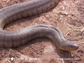 Snakes In Animals World Water Snake