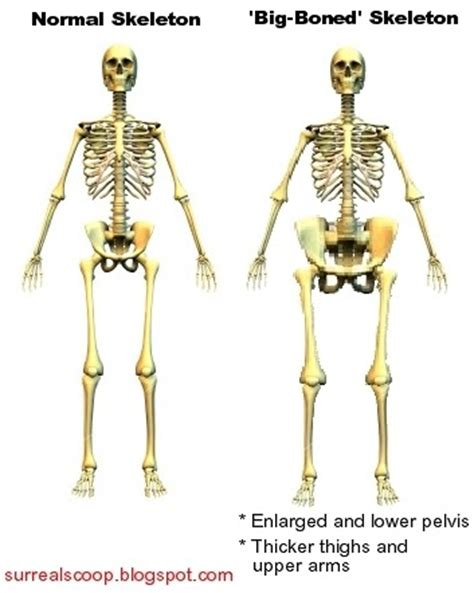 big bones quot big boned quot skeleton discovered surreal scoop