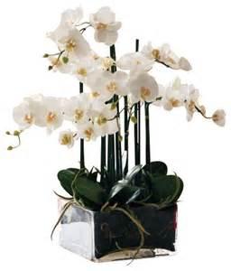 phalaenopsis in square glass flower arrangement